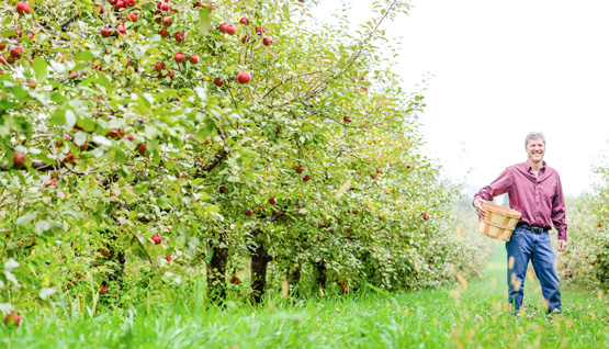 555x318_man_in_orchard